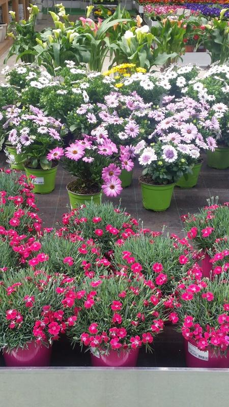 Piante perenni fiorite for Fiori grassi da giardino